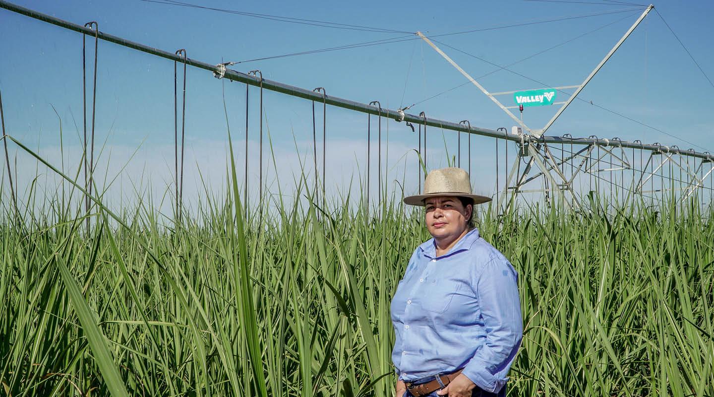 Sugarcane blog 1