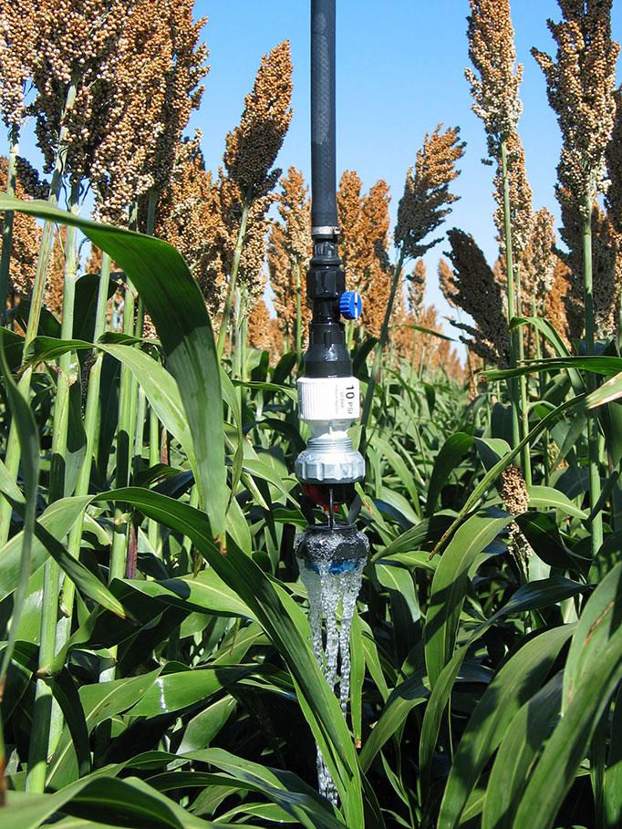 LDN_bubbler_corn.jpg