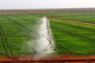 first pivot crop