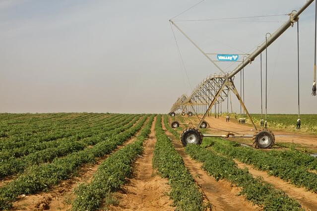 Why It's Better to Grow Tomatoes With a Valley Center Pivot Than With Drip