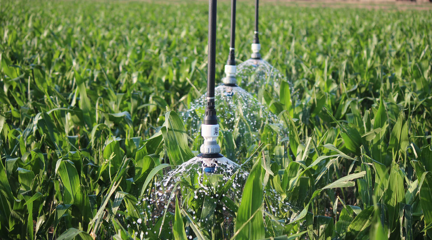 sprinkler_on_corn