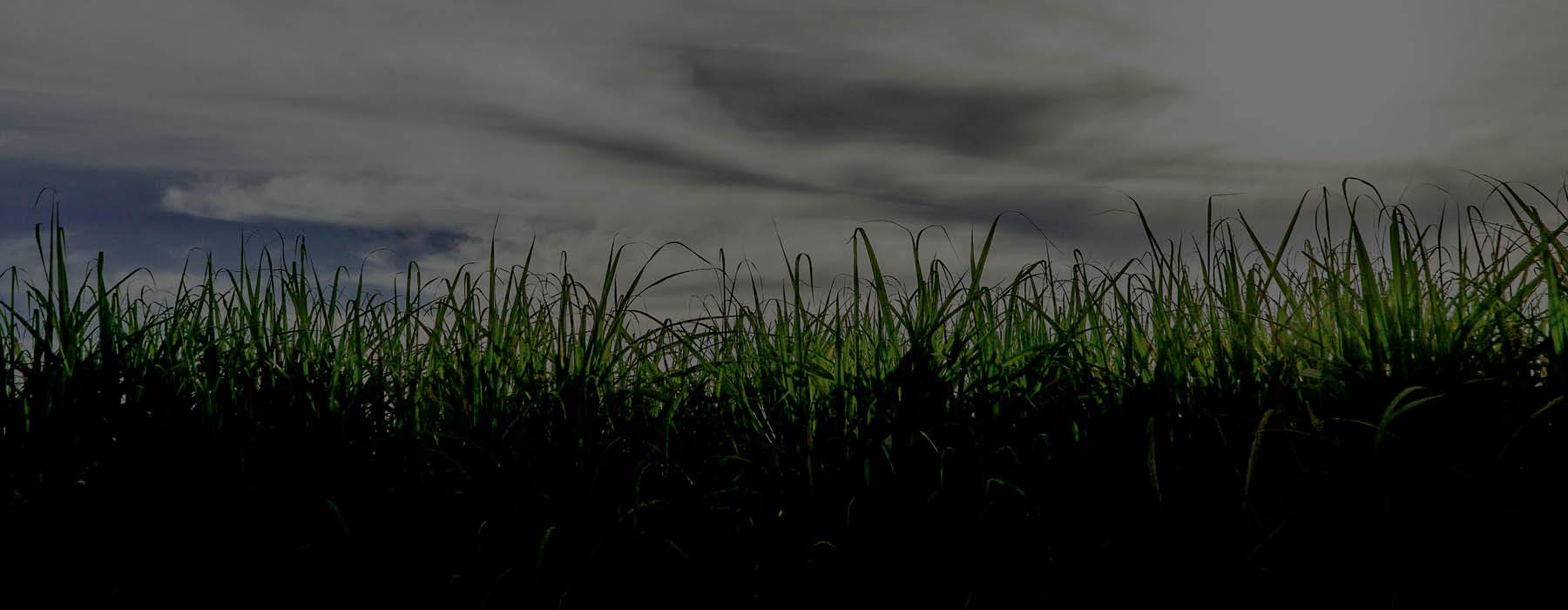 sugarcane header.jpg