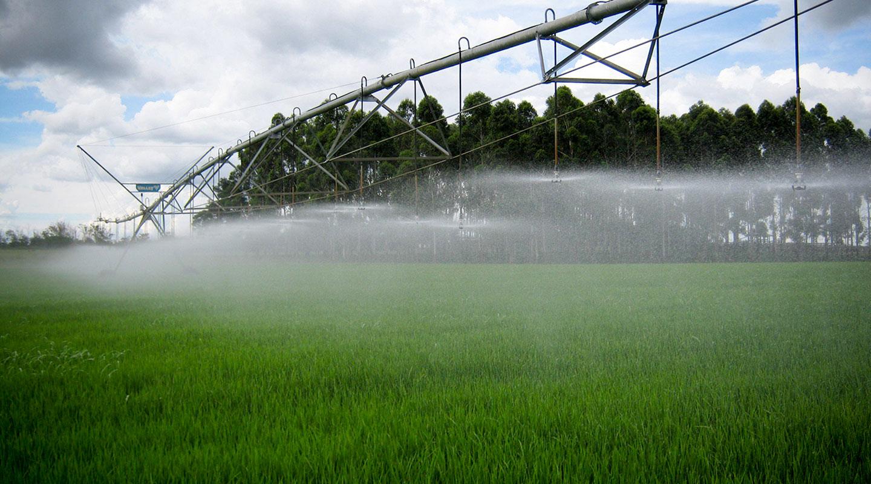 rice irrigation