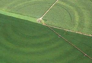 Consider Uneven Crop Growth
