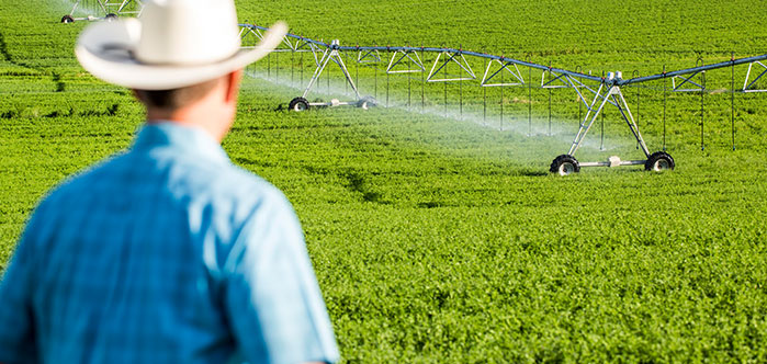 Learn about irrigation techniques that will maximize yields